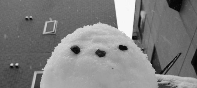 寒いです。目の前が真っ白です。