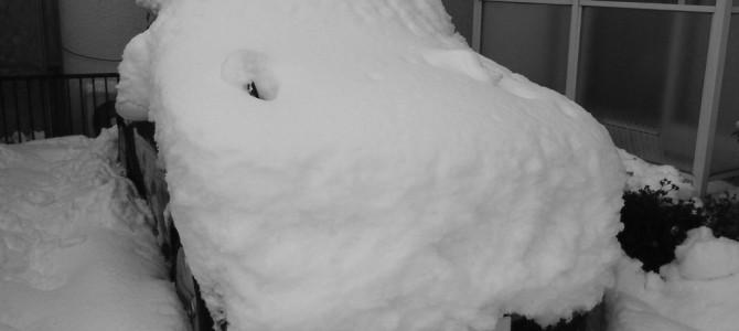 43年ぶりの大雪です。